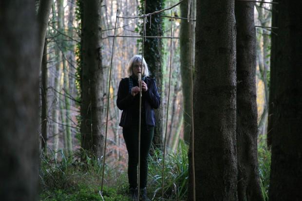 pinebeechpinewordpress